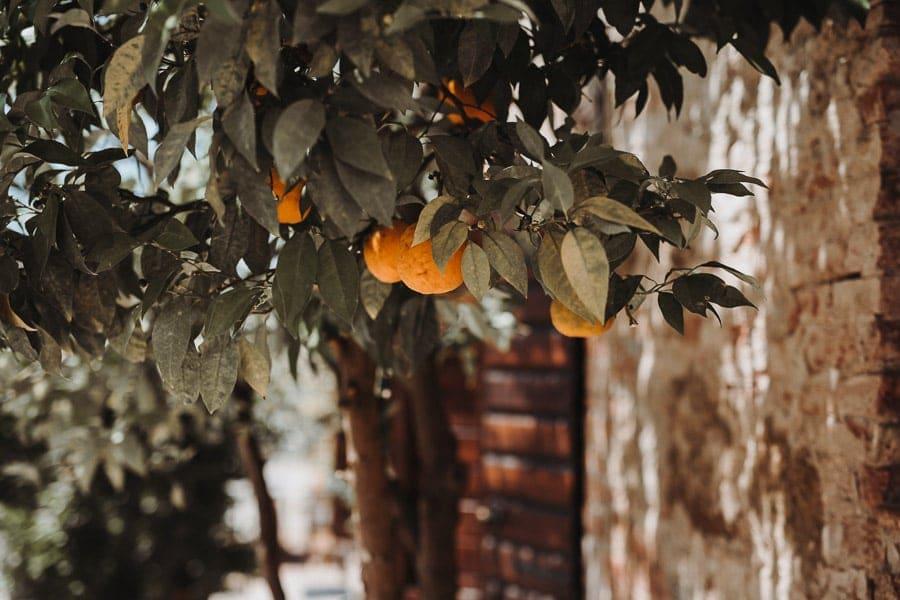 Orangenbaum Toskana